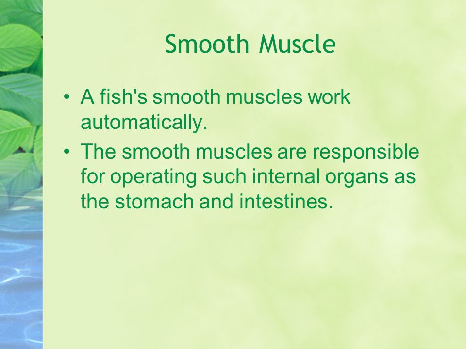 Smooth Muscle A fish's smooth muscles work automatically. The smooth muscles are responsible for operating such internal organs as the stomach and int