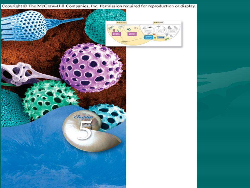 Taxonomy of Chapter 5: The Microbial World Monera (Prokaryotes) Bacteria Heterotrophic bacteria Autotrophic bacteria Cyanobacteria Archaea