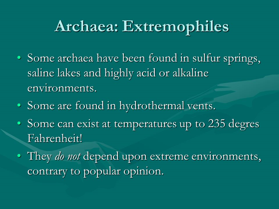 Archaea: Extremophiles Archaea: Extremophiles Some archaea have been found in sulfur springs, saline lakes and highly acid or alkaline environments.So