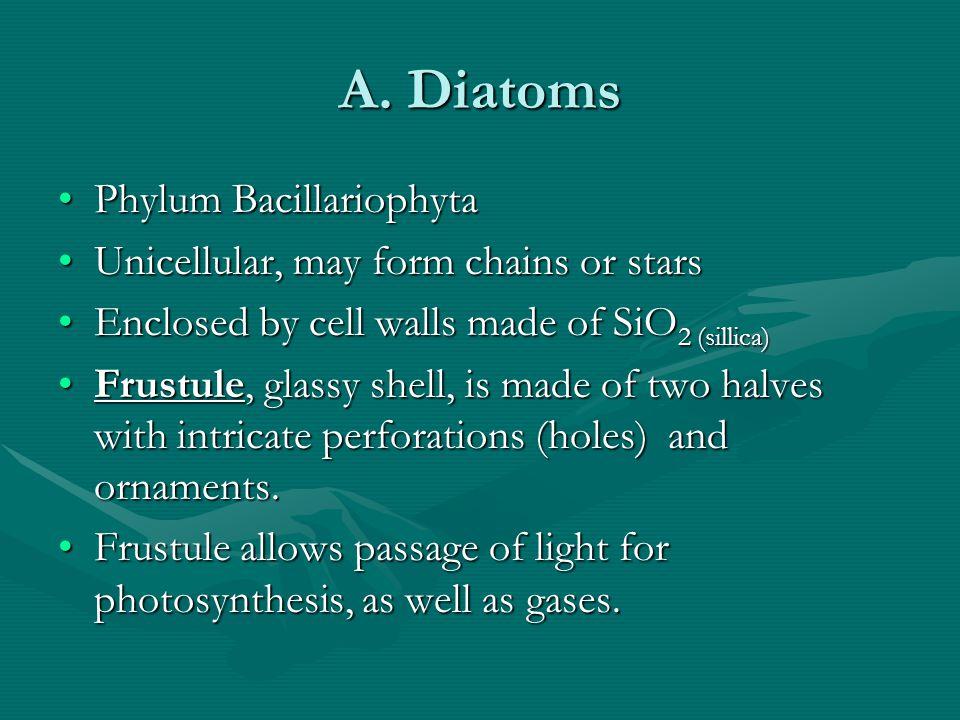 A. Diatoms Phylum BacillariophytaPhylum Bacillariophyta Unicellular, may form chains or starsUnicellular, may form chains or stars Enclosed by cell wa