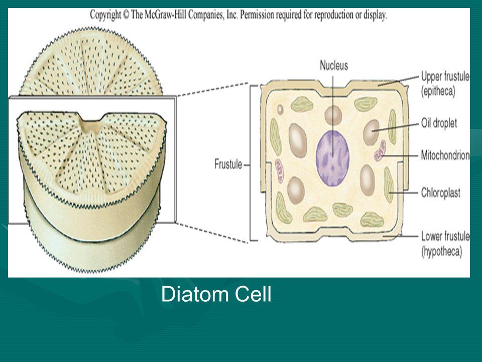Diatom Cell