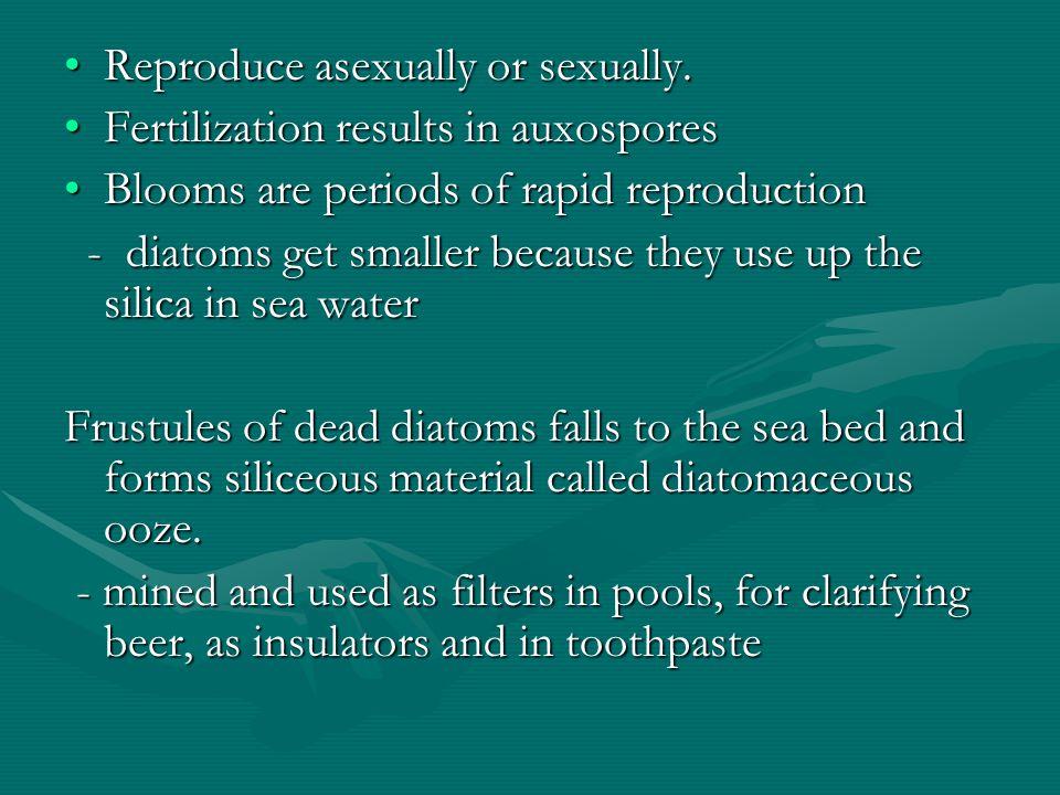 Reproduce asexually or sexually.Reproduce asexually or sexually. Fertilization results in auxosporesFertilization results in auxospores Blooms are per