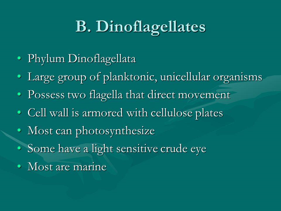 B. Dinoflagellates Phylum DinoflagellataPhylum Dinoflagellata Large group of planktonic, unicellular organismsLarge group of planktonic, unicellular o