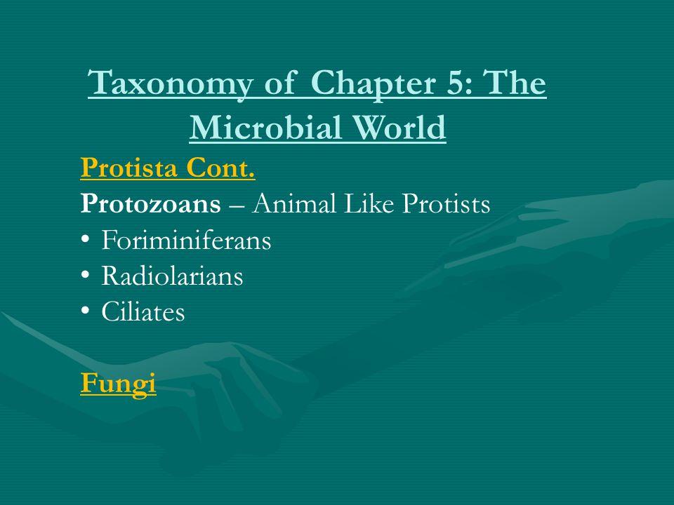 Taxonomy of Chapter 5: The Microbial World Protista Cont. Protozoans – Animal Like Protists Foriminiferans Radiolarians Ciliates Fungi