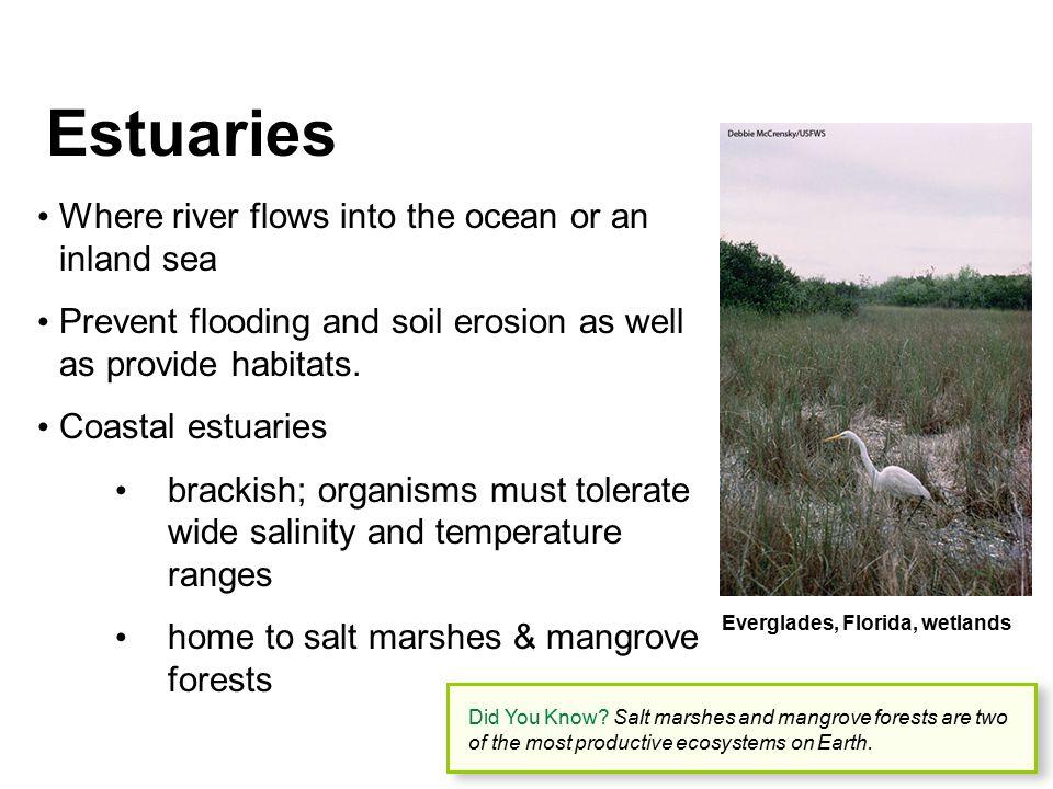 Estuaries Where river flows into the ocean or an inland sea Prevent flooding and soil erosion as well as provide habitats. Coastal estuaries brackish;