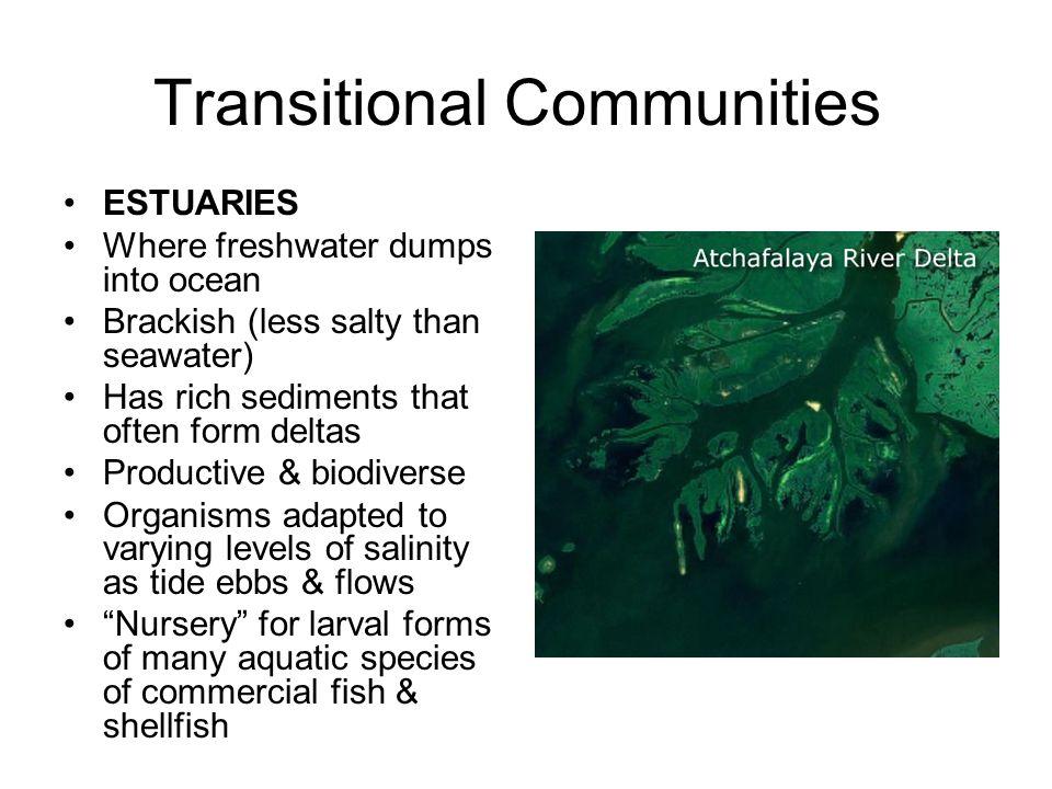 Transitional Communities ESTUARIES Where freshwater dumps into ocean Brackish (less salty than seawater) Has rich sediments that often form deltas Pro