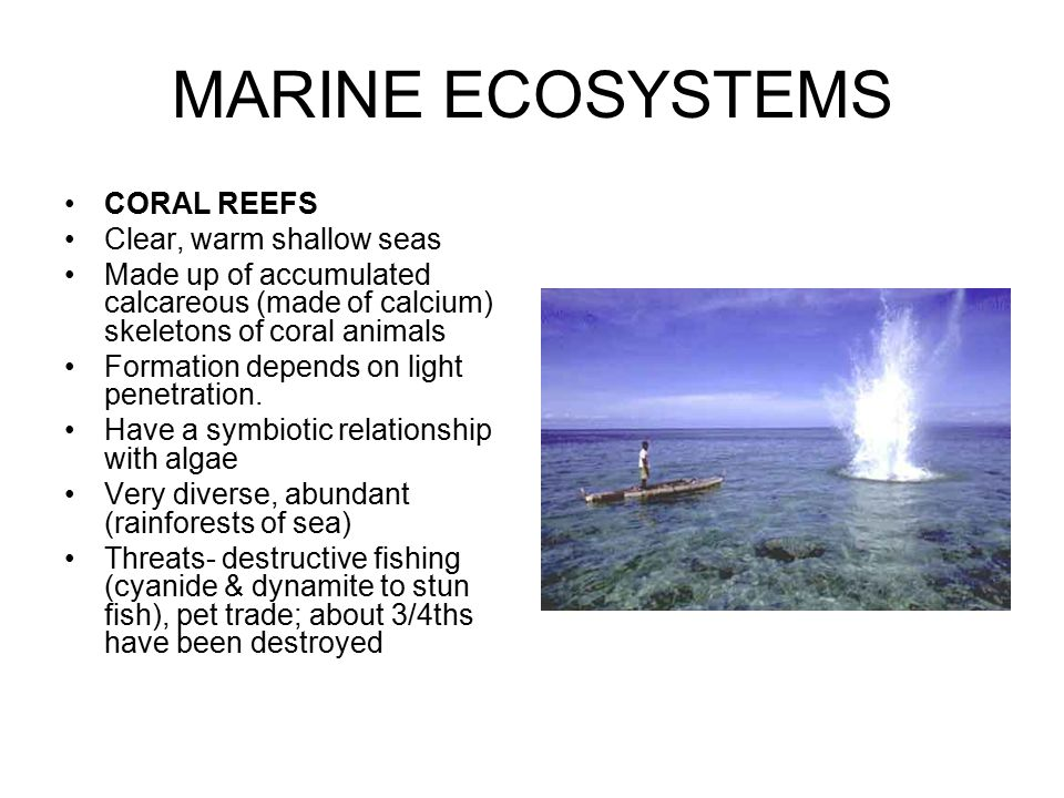 MARINE ECOSYSTEMS CORAL REEFS Clear, warm shallow seas Made up of accumulated calcareous (made of calcium) skeletons of coral animals Formation depend