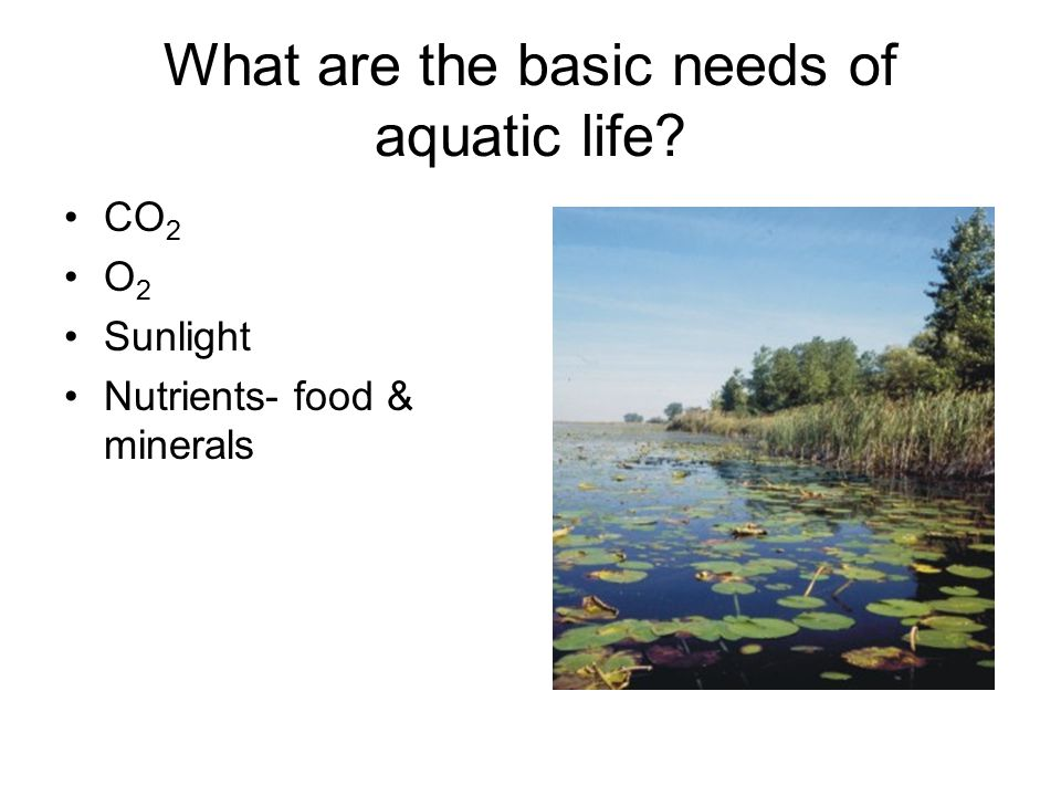 Describing Aquatic Ecosystems Salinity: Amount of dissolved salt present in water Salt water, fresh water, or brackish Photosynthesis: Light availability Depth & water clarity Flowing or standing water Zones: photic, aphotic, benthic