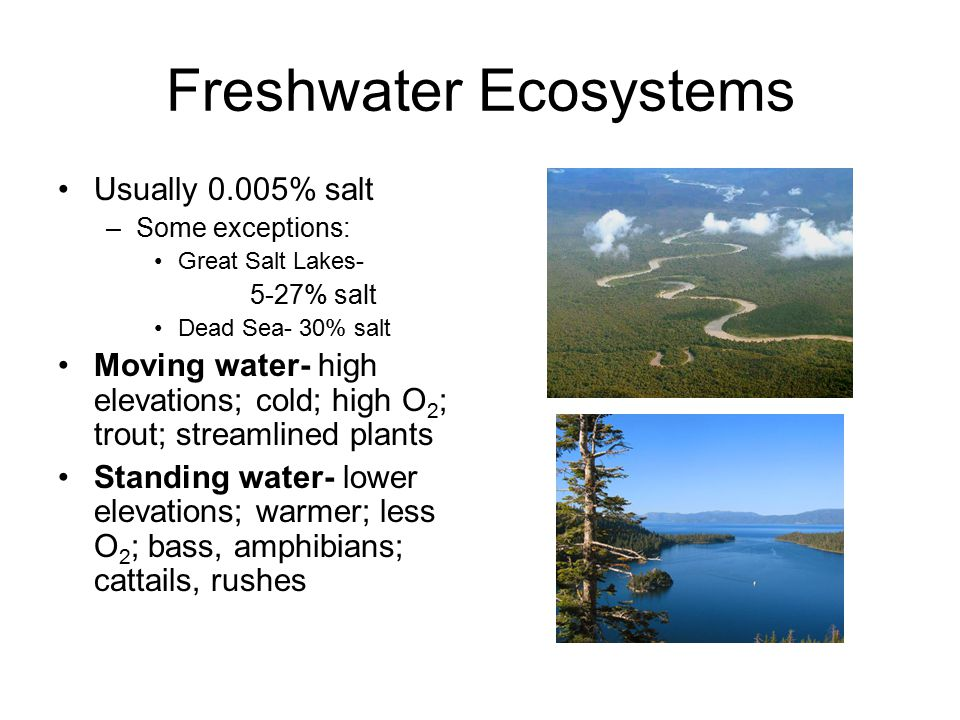 Freshwater Ecosystems Usually 0.005% salt –Some exceptions: Great Salt Lakes- 5-27% salt Dead Sea- 30% salt Moving water- high elevations; cold; high