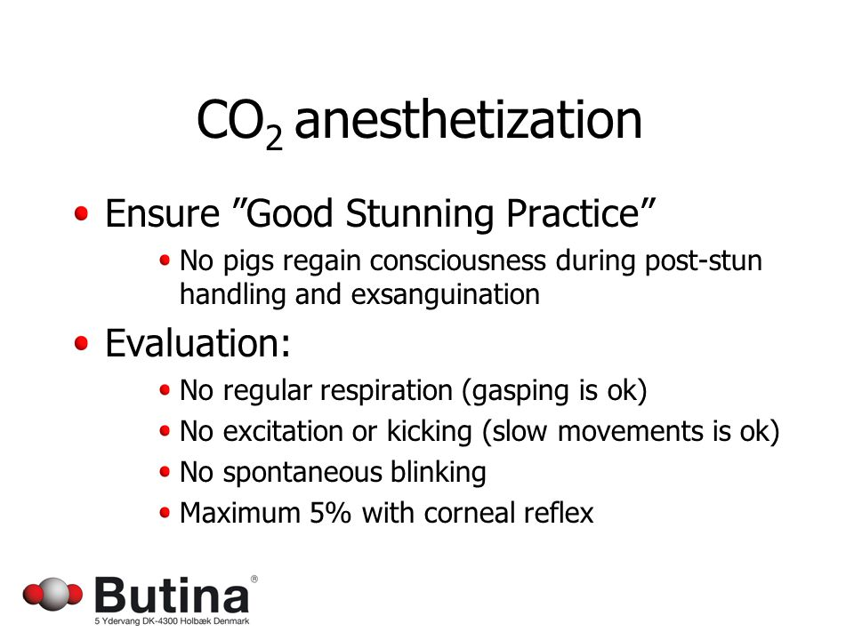 CO 2 anesthetization Ensure Good Stunning Practice No pigs regain consciousness during post-stun handling and exsanguination Evaluation: No regular respiration (gasping is ok) No excitation or kicking (slow movements is ok) No spontaneous blinking Maximum 5% with corneal reflex