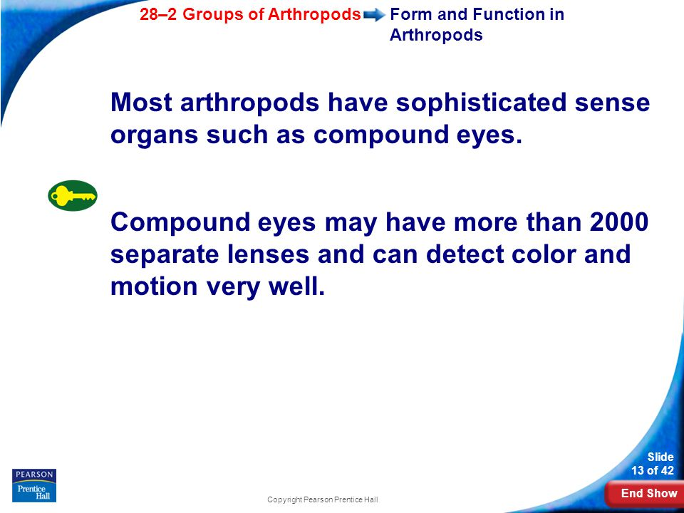 End Show 28–2 Groups of Arthropods Slide 13 of 42 Copyright Pearson Prentice Hall Form and Function in Arthropods Most arthropods have sophisticated s