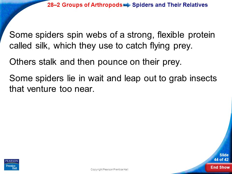 End Show 28–2 Groups of Arthropods Slide 44 of 42 Copyright Pearson Prentice Hall Spiders and Their Relatives Some spiders spin webs of a strong, flexible protein called silk, which they use to catch flying prey.
