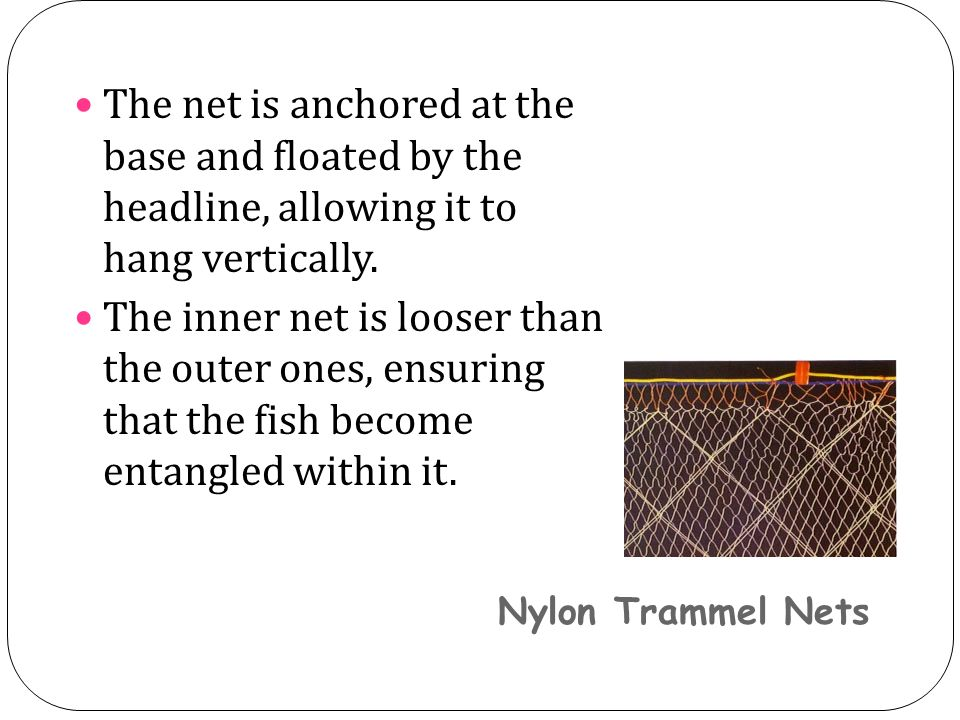 Nylon Trammel Nets The net is anchored at the base and floated by the headline, allowing it to hang vertically.