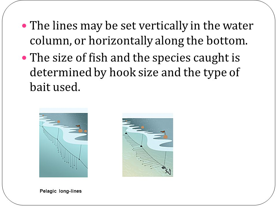 The lines may be set vertically in the water column, or horizontally along the bottom. The size of fish and the species caught is determined by hook s