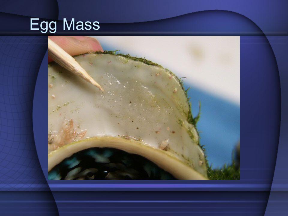 Egg Mass