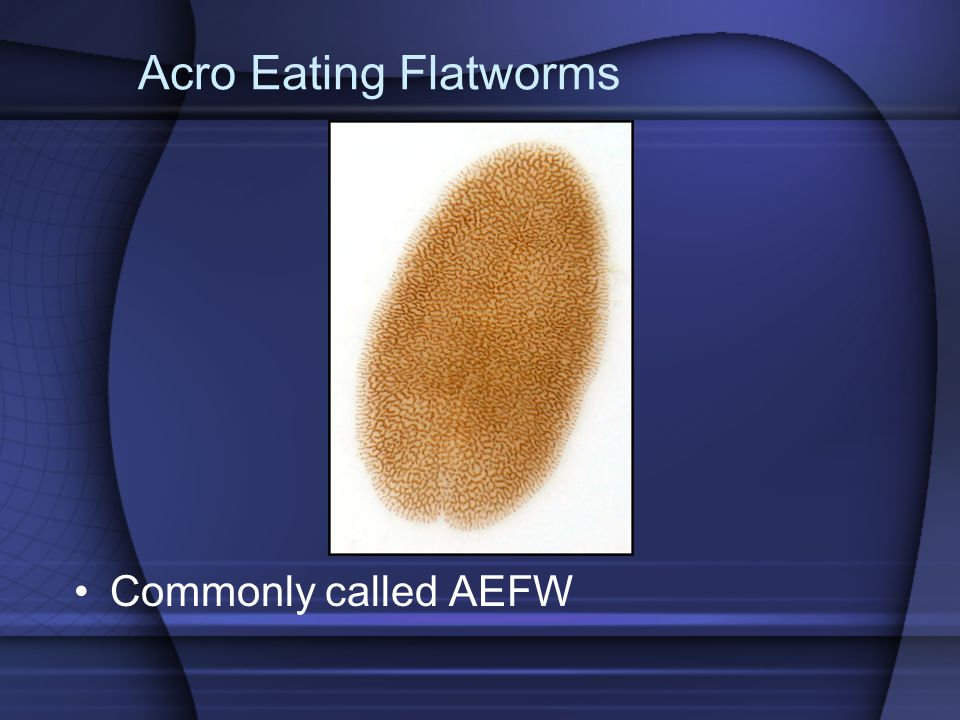 Acro Eating Flatworms Commonly called AEFW