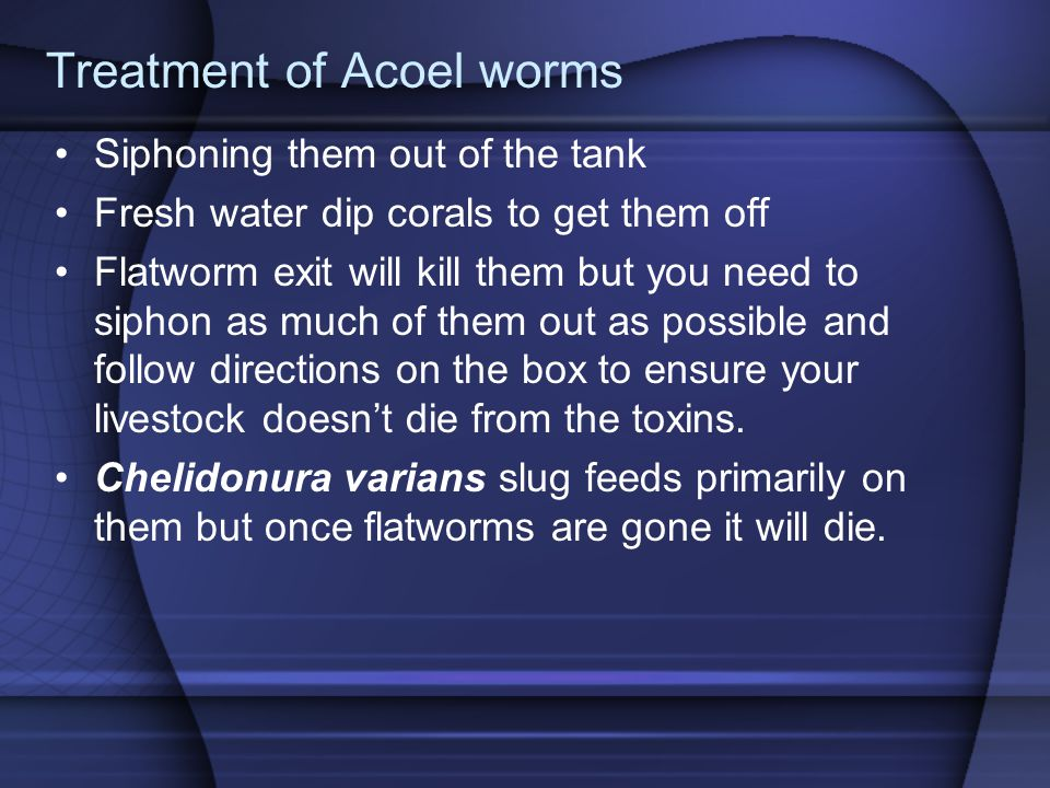 Treatment of Acoel worms Siphoning them out of the tank Fresh water dip corals to get them off Flatworm exit will kill them but you need to siphon as much of them out as possible and follow directions on the box to ensure your livestock doesn't die from the toxins.