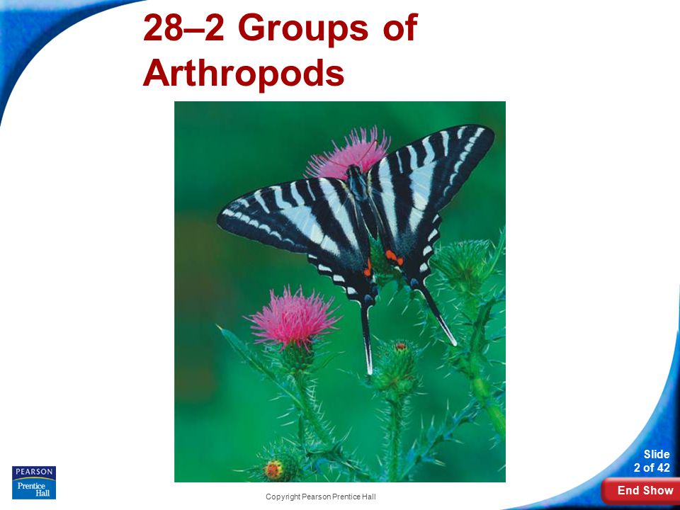 End Show Slide 2 of 42 Copyright Pearson Prentice Hall 28–2 Groups of Arthropods