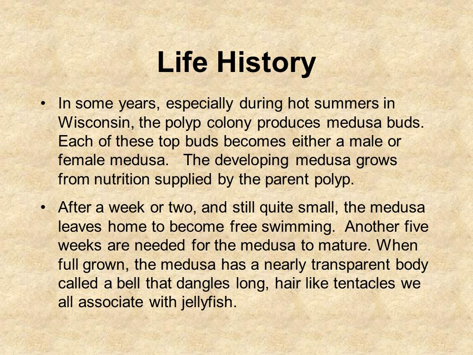 Life History In some years, especially during hot summers in Wisconsin, the polyp colony produces medusa buds.
