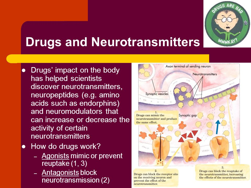Drugs and Neurotransmitters Drugs' impact on the body has helped scientists discover neurotransmitters, neuropeptides (e.g.