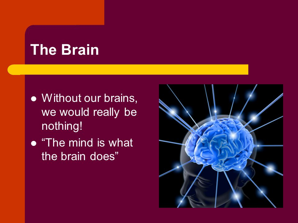 The Brain Without our brains, we would really be nothing! The mind is what the brain does