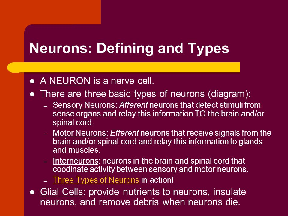 Neurons: Defining and Types A NEURON is a nerve cell.