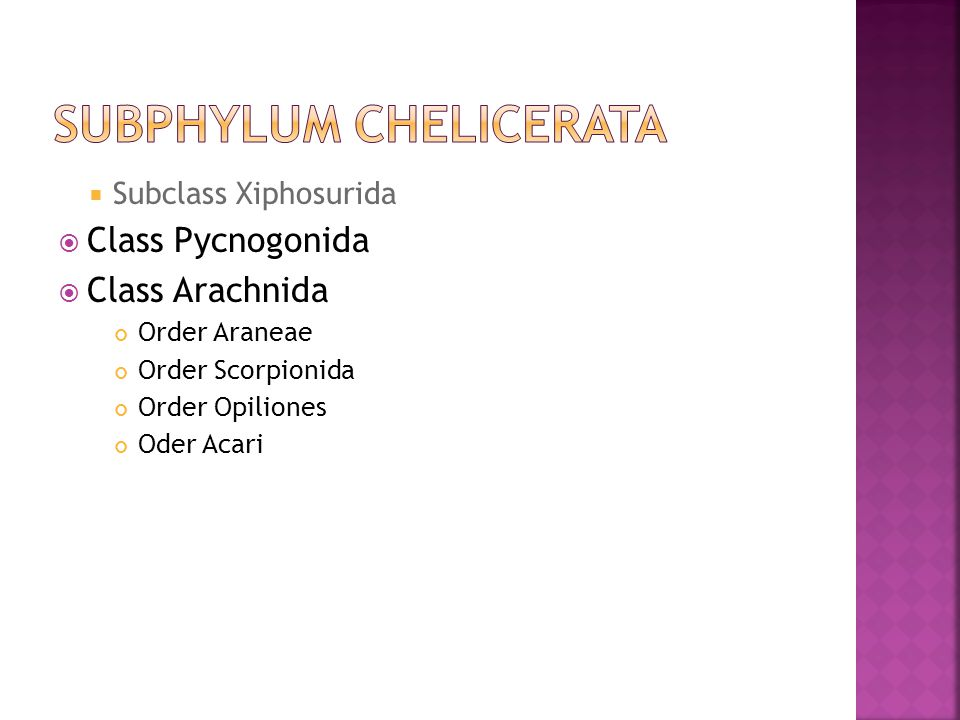  Subclass Xiphosurida  Class Pycnogonida  Class Arachnida Order Araneae Order Scorpionida Order Opiliones Oder Acari