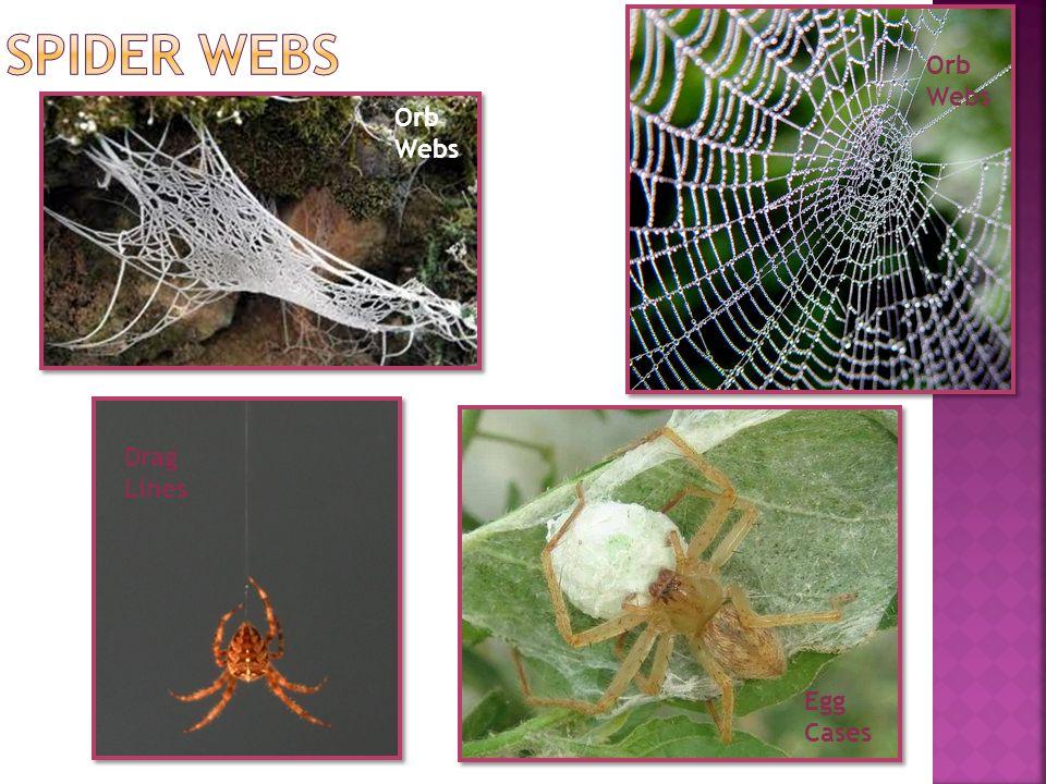 Drag Lines Orb Webs Egg Cases