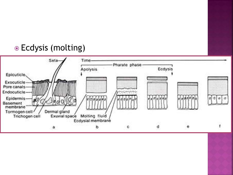  Ecdysis (molting)