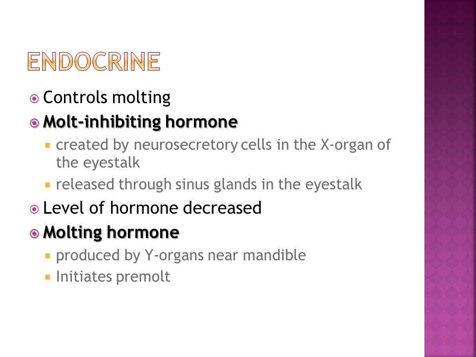  Controls molting  Molt-inhibiting hormone  created by neurosecretory cells in the X-organ of the eyestalk  released through sinus glands in the e