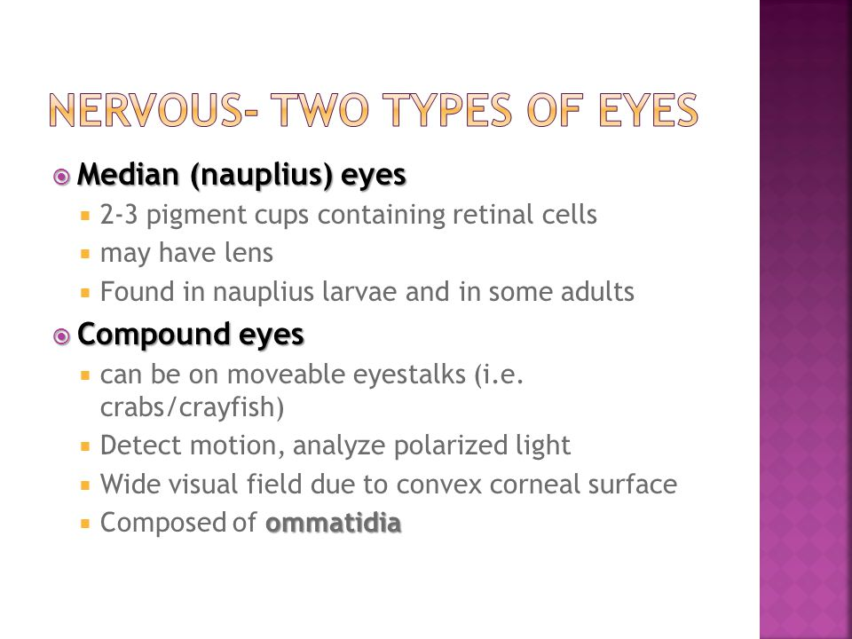  Median (nauplius) eyes  2-3 pigment cups containing retinal cells  may have lens  Found in nauplius larvae and in some adults  Compound eyes  c
