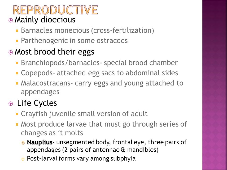  Mainly dioecious  Barnacles monecious (cross-fertilization)  Parthenogenic in some ostracods  Most brood their eggs  Branchiopods/barnacles- spe