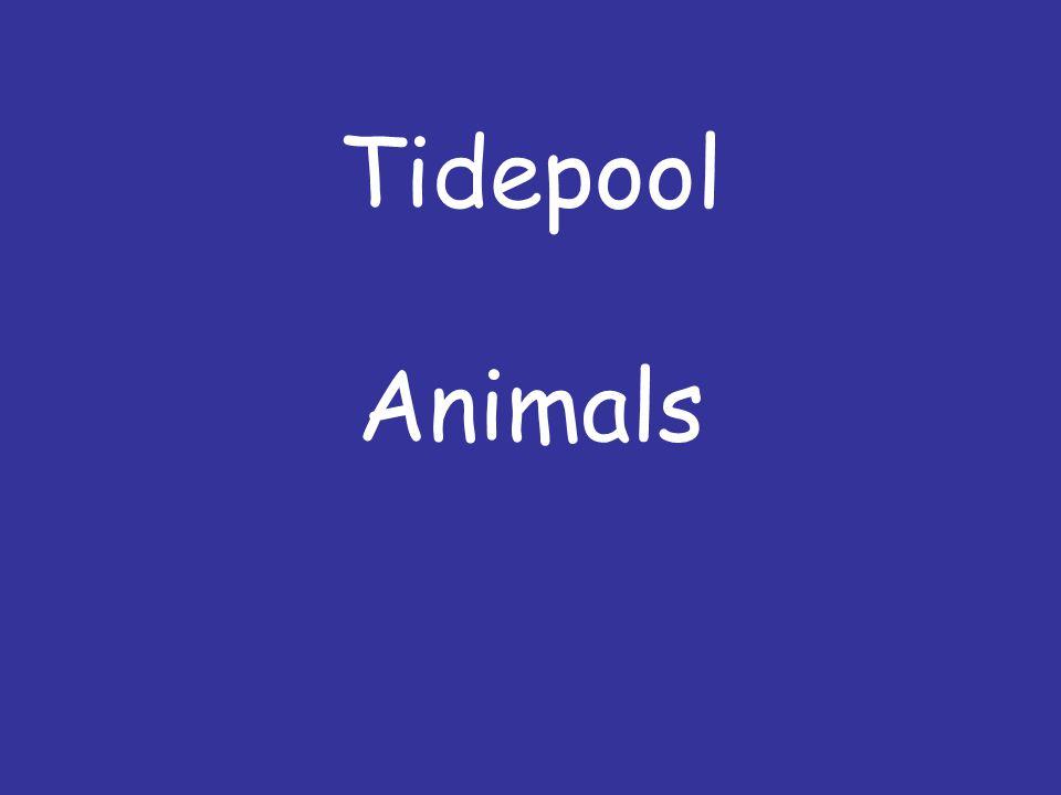 Tidepool Animals