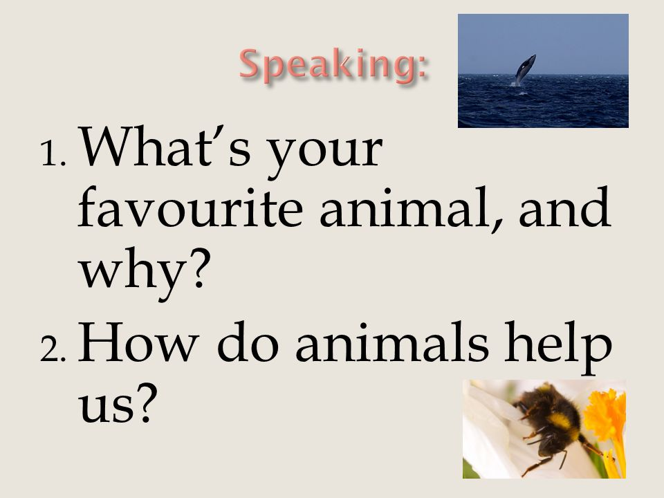 1. What's your favourite animal, and why? 2. How do animals help us?