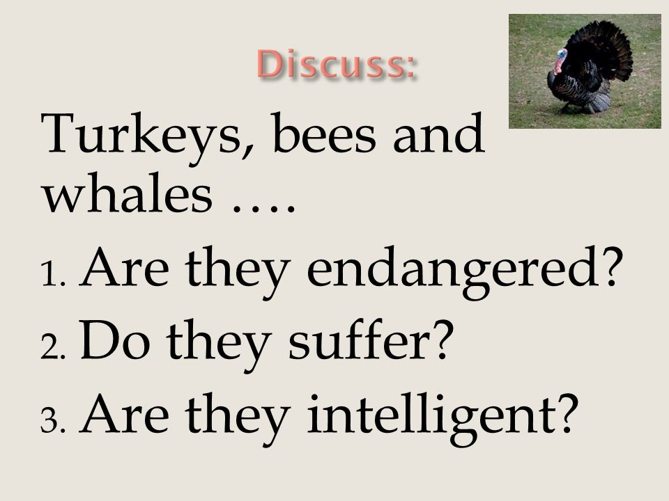 Turkeys, bees and whales …. 1. Are they endangered? 2. Do they suffer? 3. Are they intelligent?