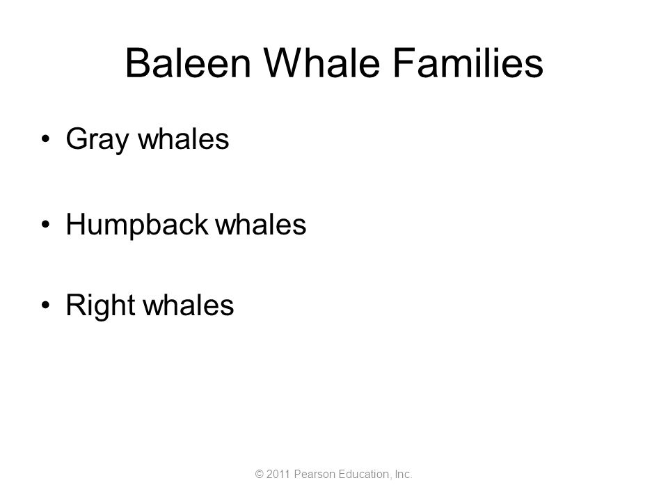 © 2011 Pearson Education, Inc. Baleen Whale Families Gray whales Humpback whales Right whales