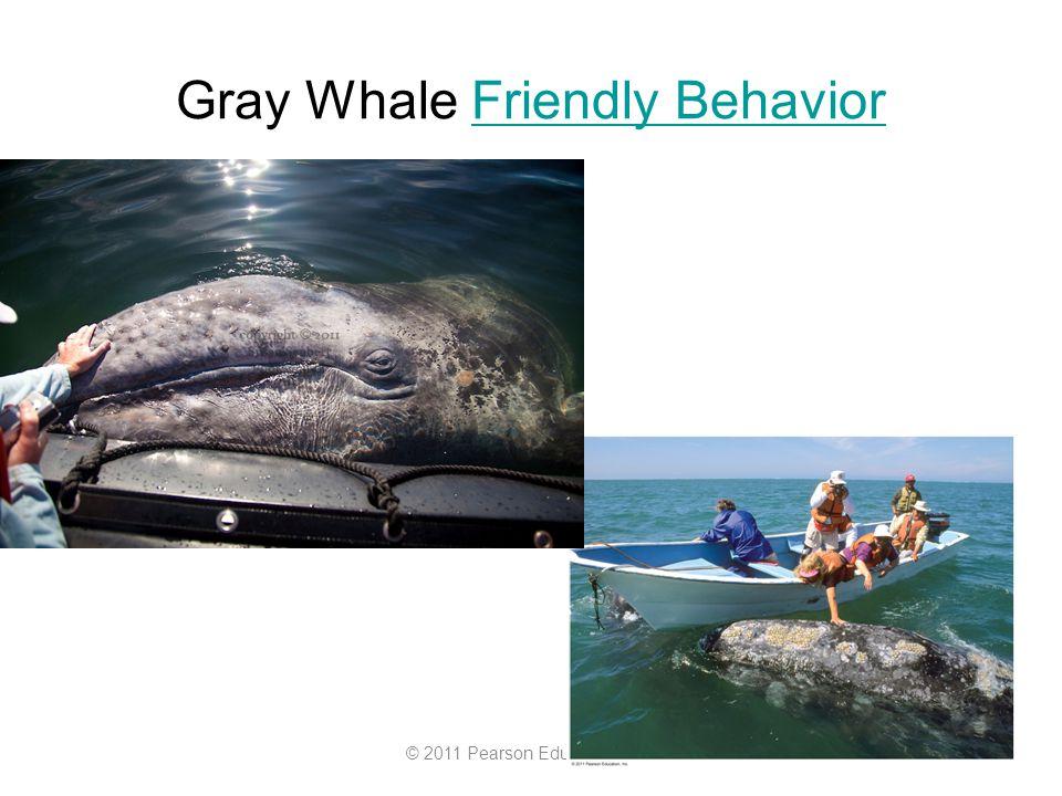 © 2011 Pearson Education, Inc. Gray Whale Friendly BehaviorFriendly Behavior