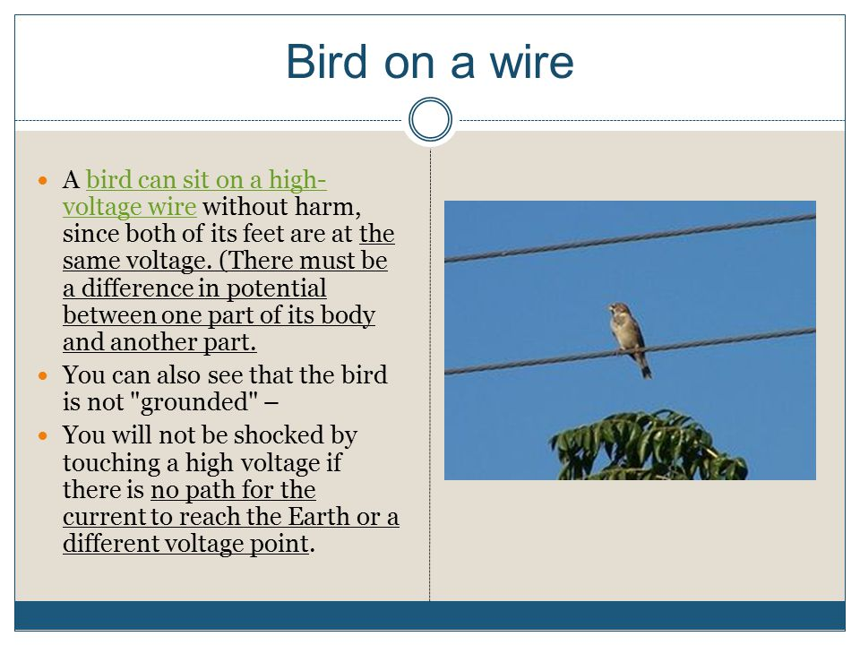 Bird on a wire A bird can sit on a high- voltage wire without harm, since both of its feet are at the same voltage. (There must be a difference in pot