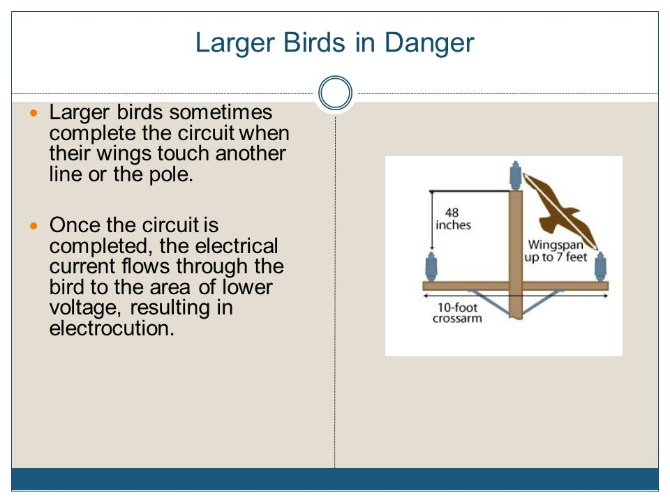Larger Birds in Danger Larger birds sometimes complete the circuit when their wings touch another line or the pole.