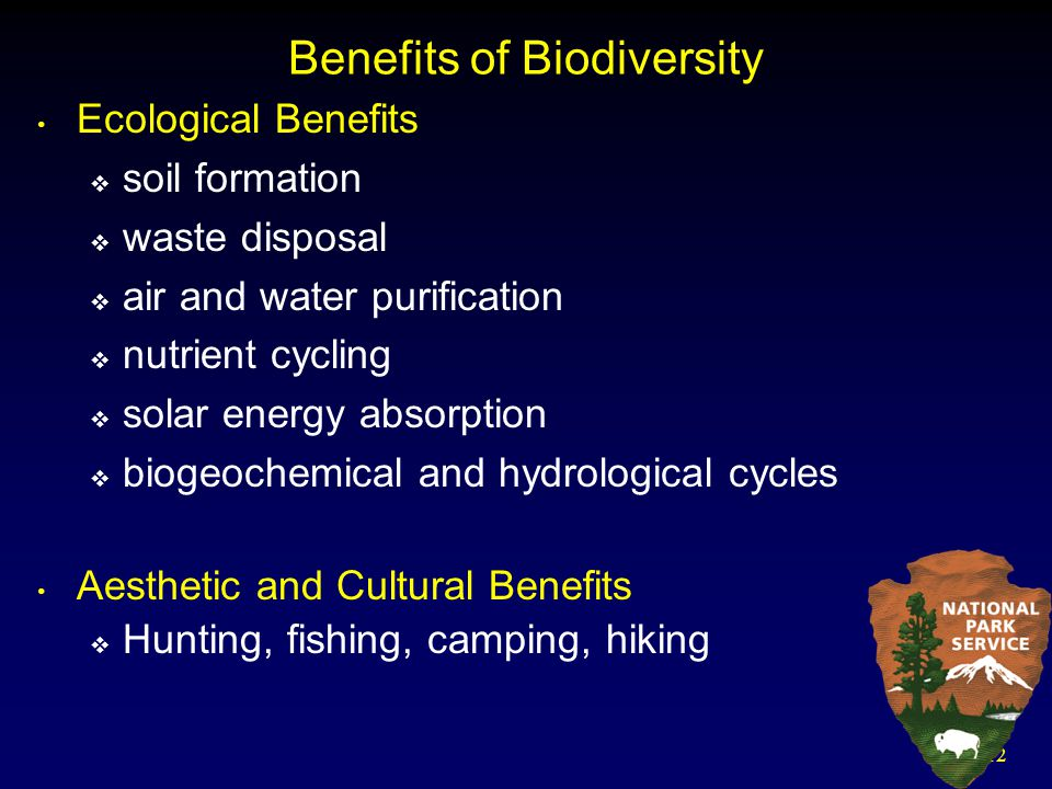 12 Benefits of Biodiversity Ecological Benefits  soil formation  waste disposal  air and water purification  nutrient cycling  solar energy absor