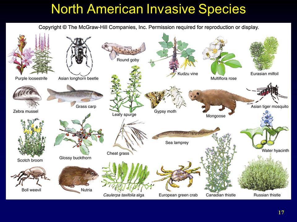 17 North American Invasive Species