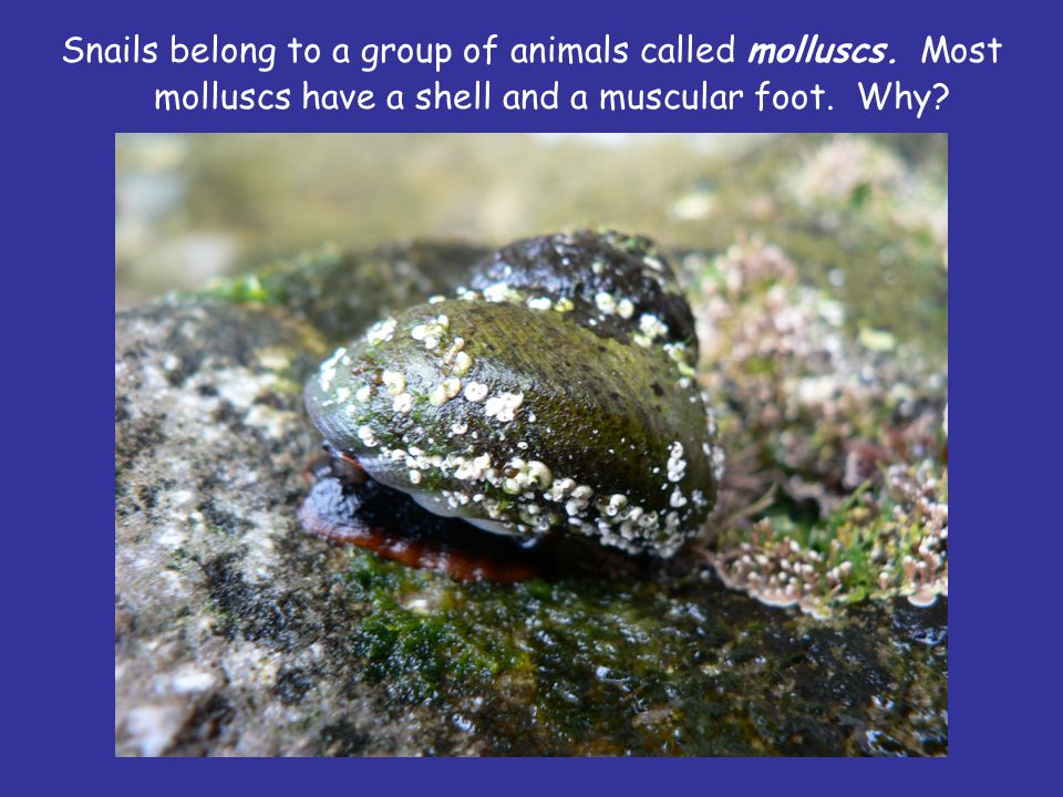Snails belong to a group of animals called molluscs.