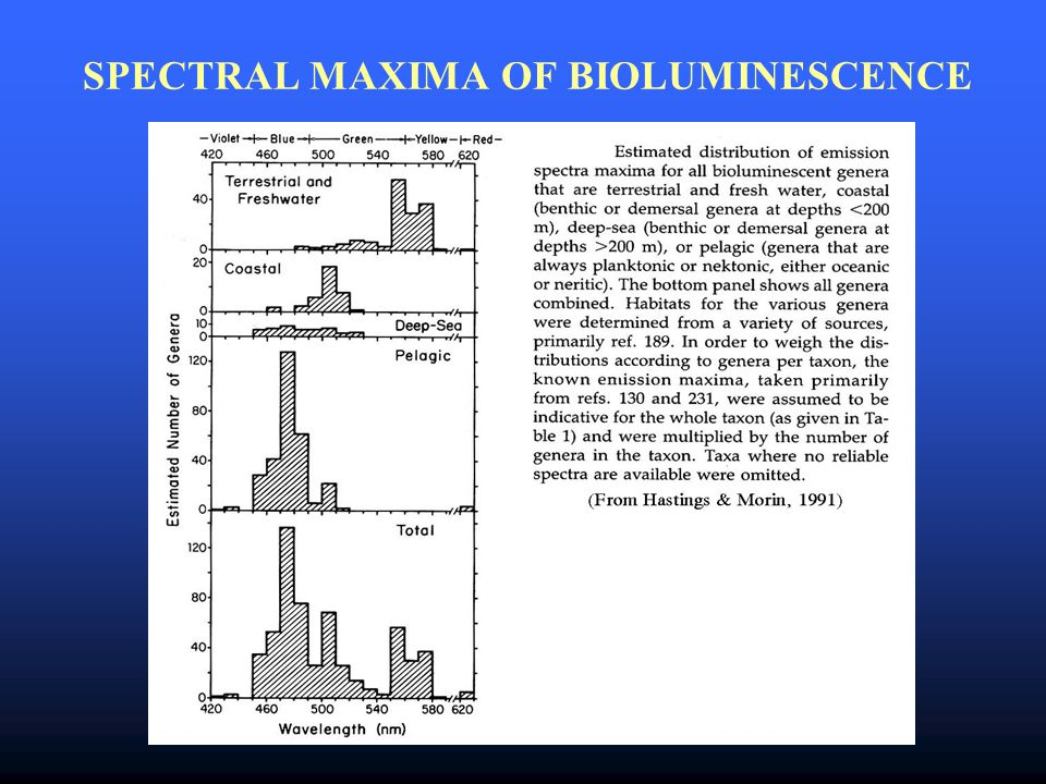SPECTRAL MAXIMA OF BIOLUMINESCENCE