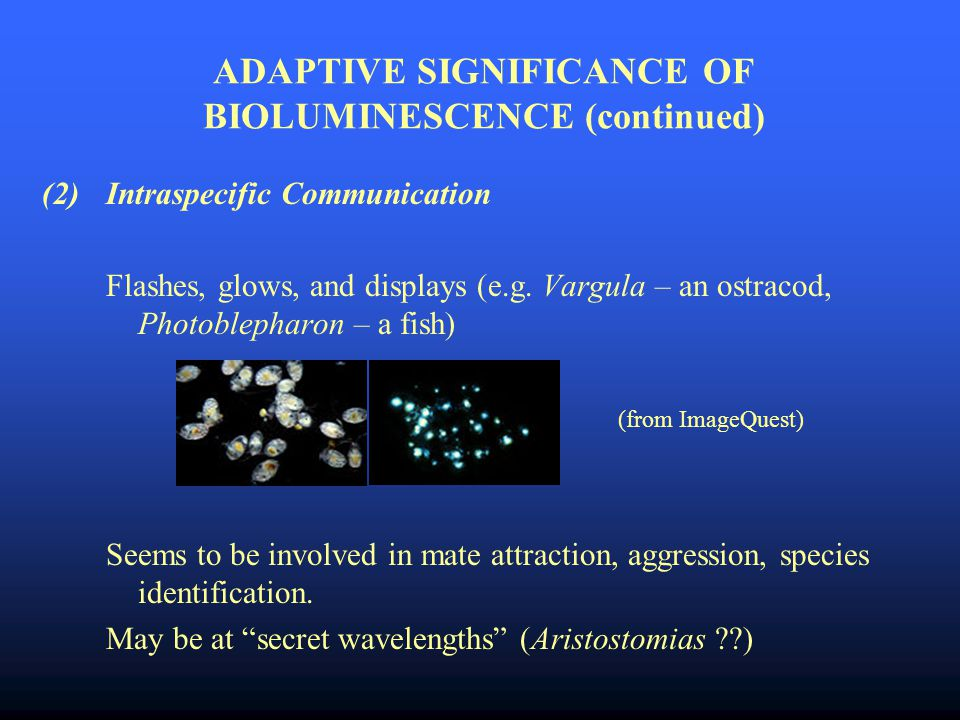 ADAPTIVE SIGNIFICANCE OF BIOLUMINESCENCE (continued) (2)Intraspecific Communication Flashes, glows, and displays (e.g.