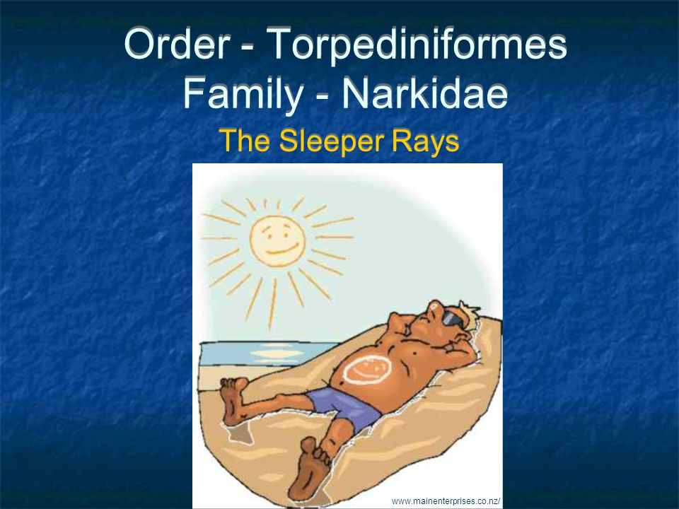Order - Torpediniformes Family - Narkidae The Sleeper Rays www.mainenterprises.co.nz/