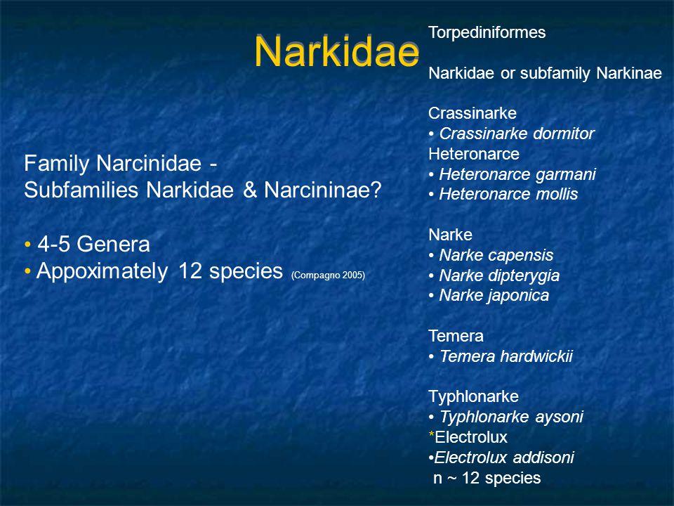 Narkidae Torpediniformes Narkidae or subfamily Narkinae Crassinarke Crassinarke dormitor Heteronarce Heteronarce garmani Heteronarce mollis Narke Nark