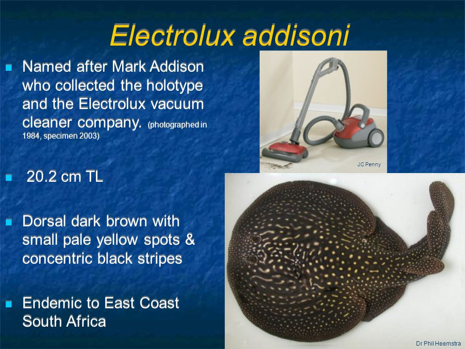 Electrolux addisoni Named after Mark Addison who collected the holotype and the Electrolux vacuum cleaner company.