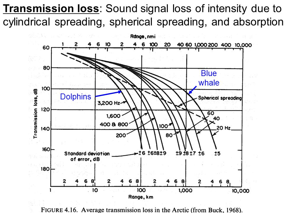 Transmission loss: Sound signal loss of intensity due to cylindrical spreading, spherical spreading, and absorption Blue whale Dolphins