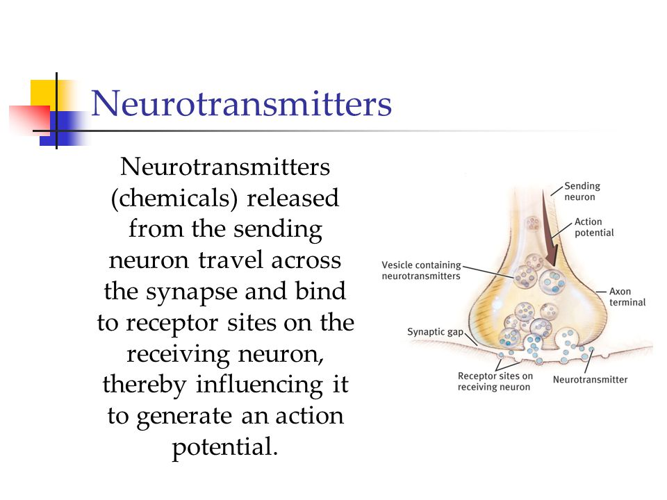 Neurotransmitters Neurotransmitters (chemicals) released from the sending neuron travel across the synapse and bind to receptor sites on the receiving