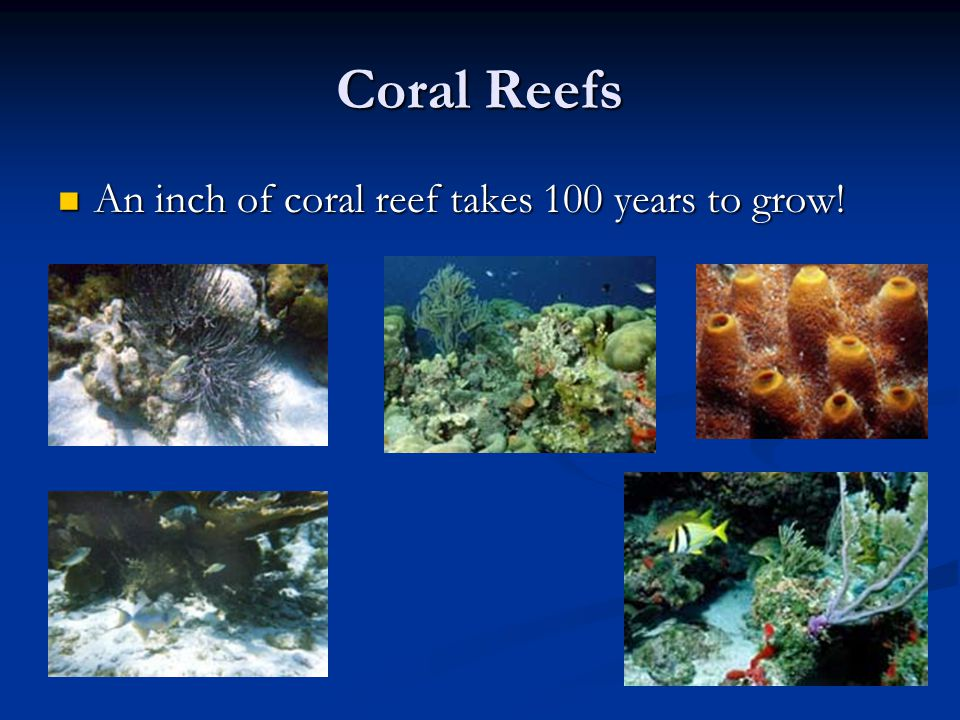 Coral Reefs An inch of coral reef takes 100 years to grow.